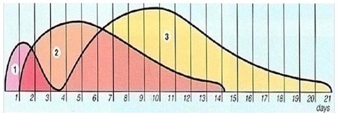 diagramma-riparazione